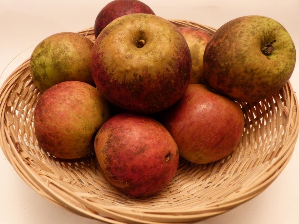 Pomme Denise (fruit).