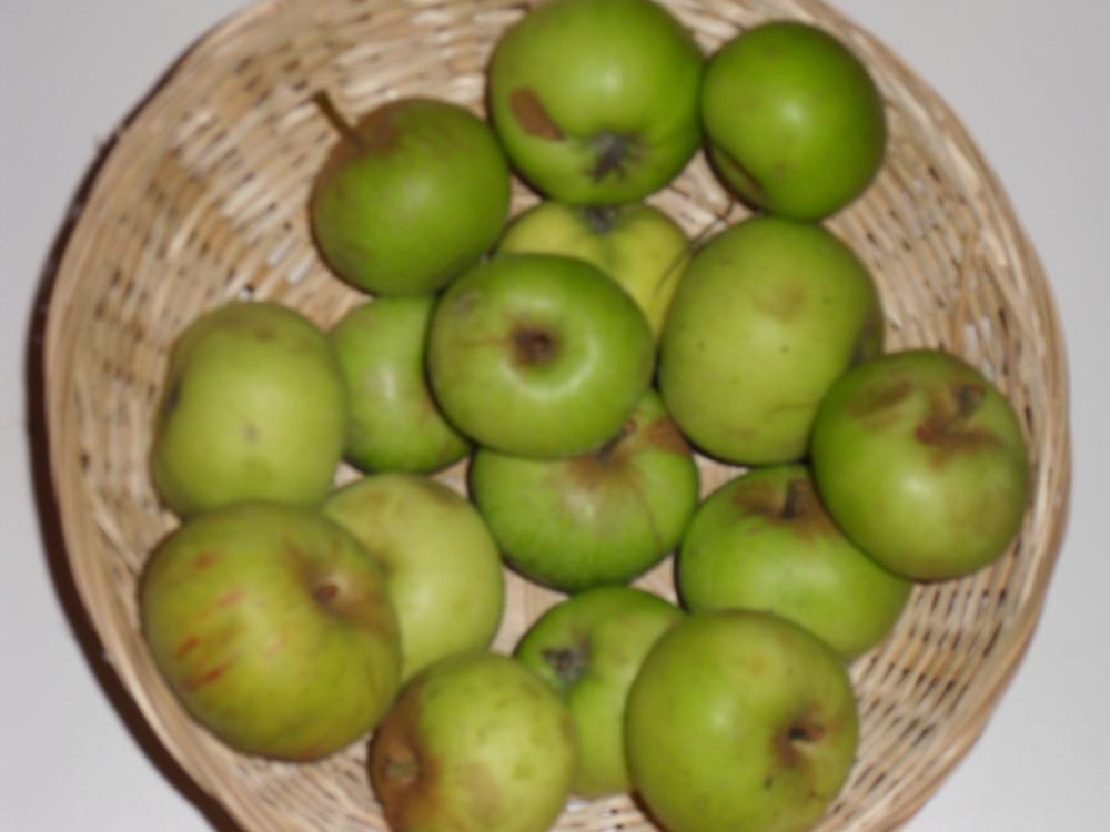 Pomme Douville (fruit).
