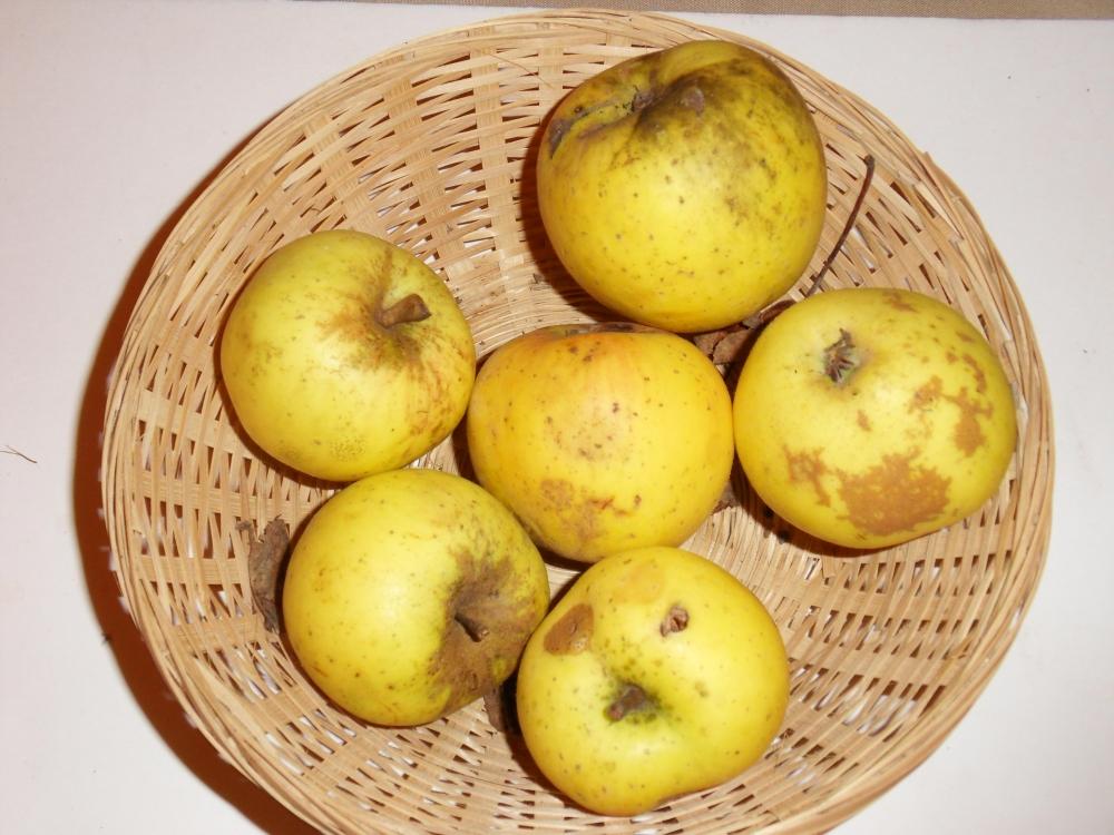 Pomme Hanin (fruit).