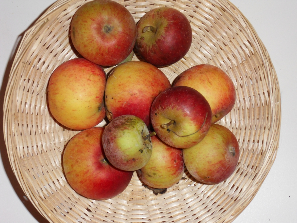 Pomme Ouin (fruit).
