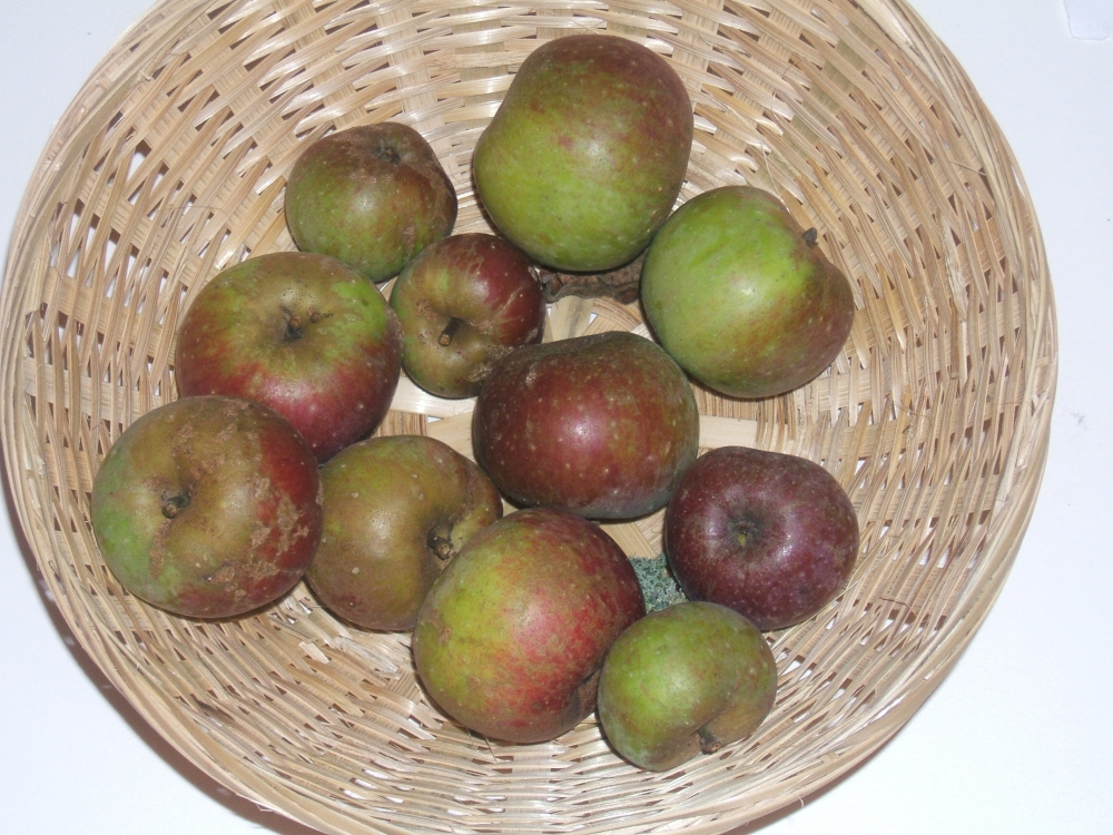 Pomme Petit (fruit).