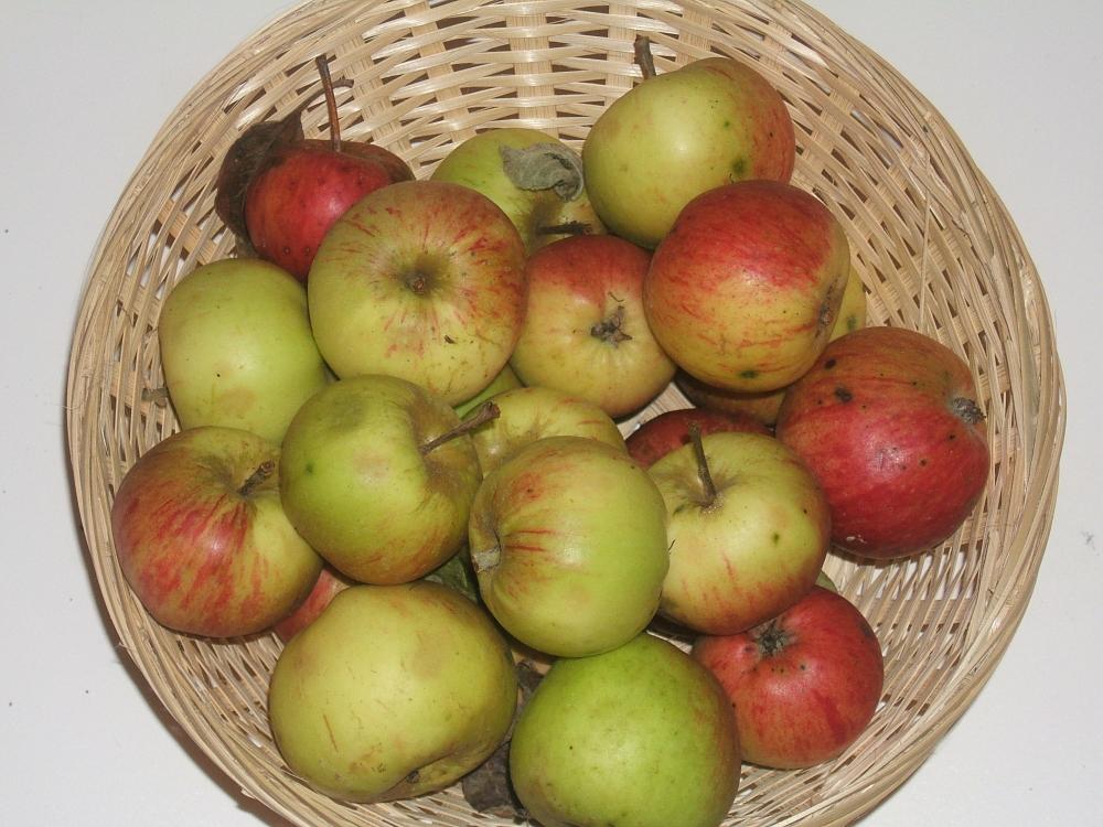 Pomme des Domaines (fruit).