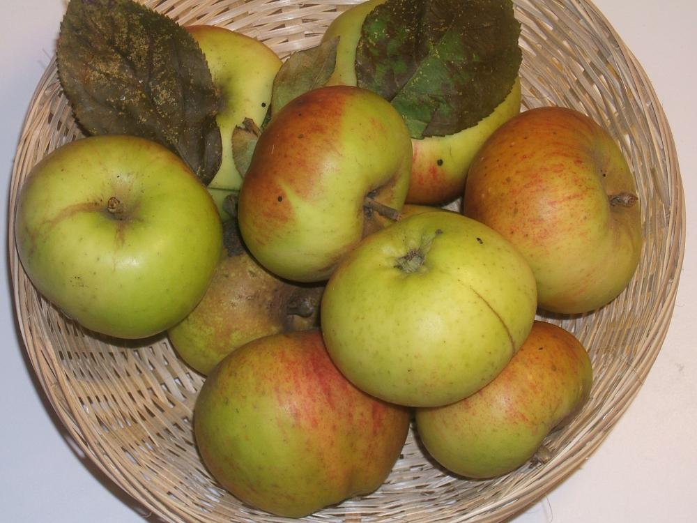 Président Descours (fruit).