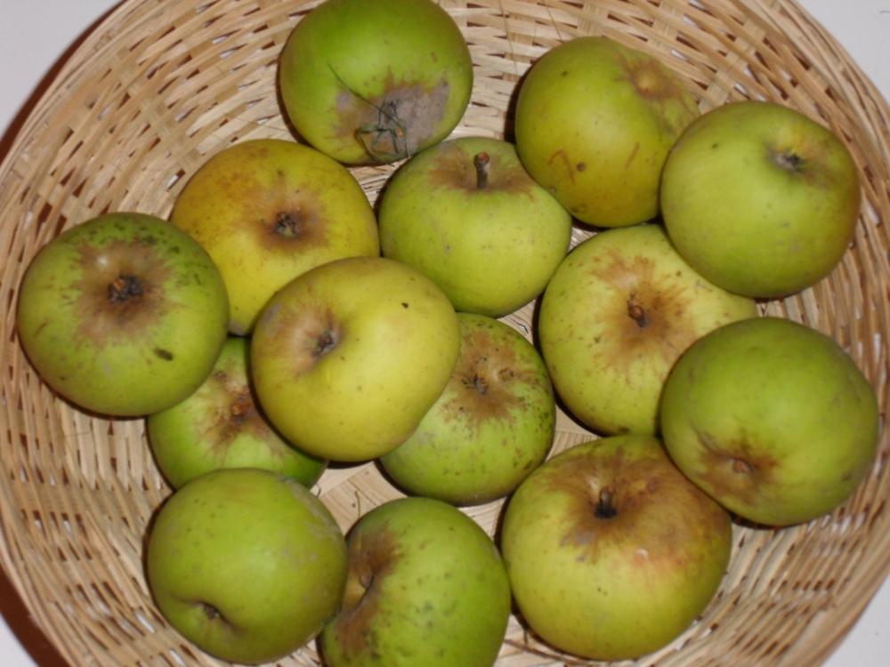 Président des Héberts (fruit).