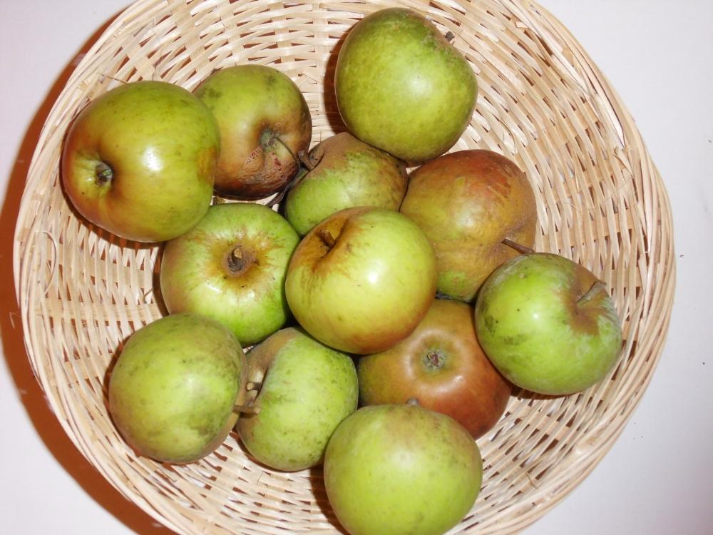Quentin (fruit).