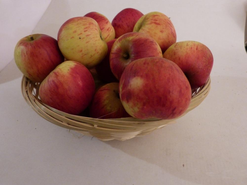 Rayée Elie (fruit).