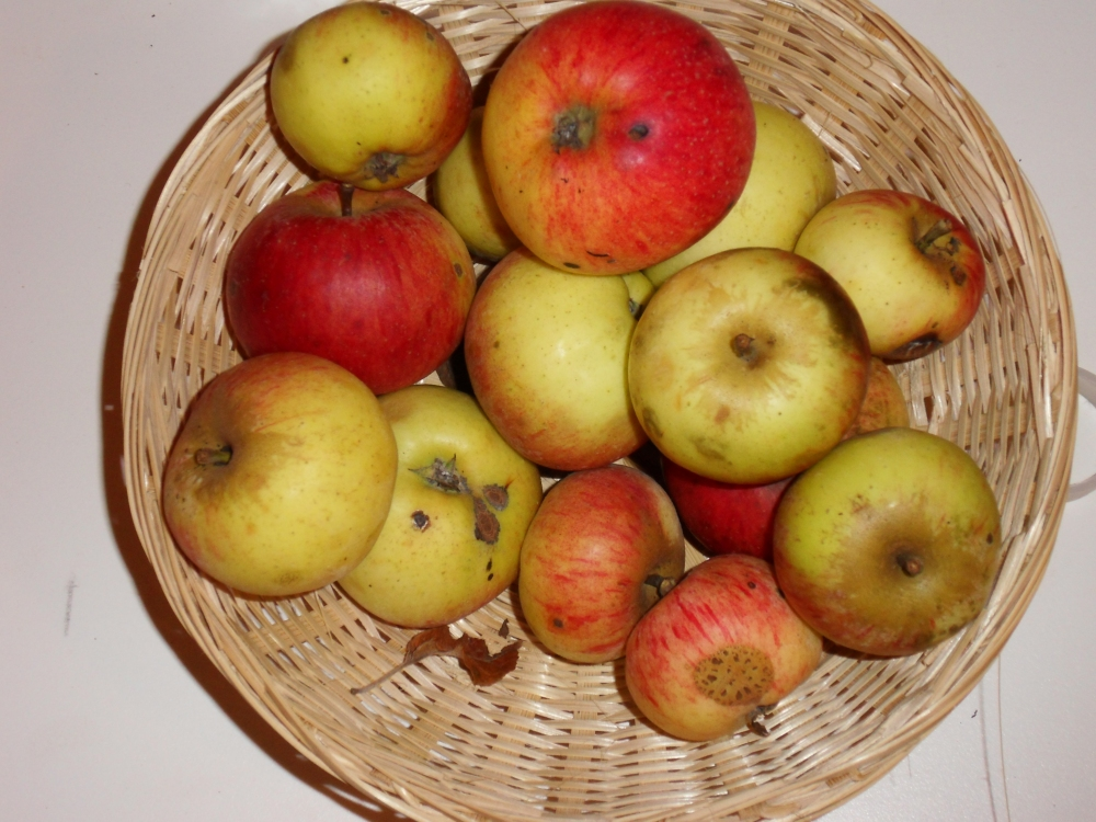Rayée Rouge Hanin (fruit).