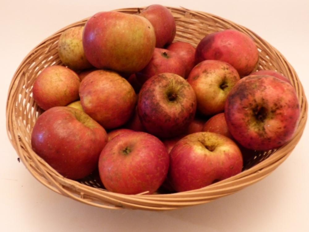 Reine des Pommes (fruit).