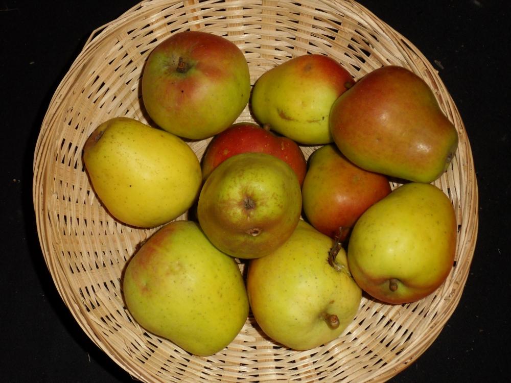 René Martin(fruit).