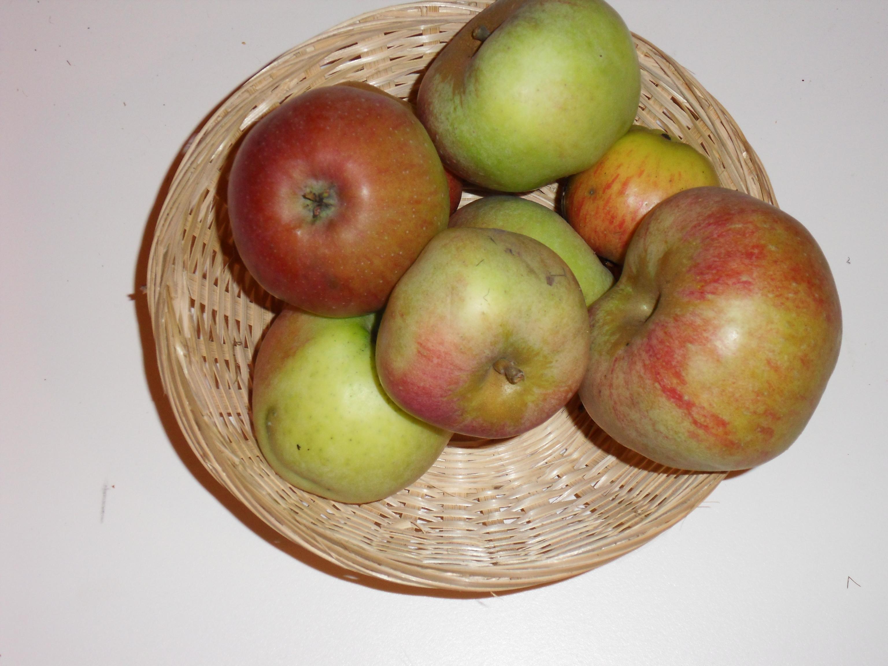 Revert (fruit).