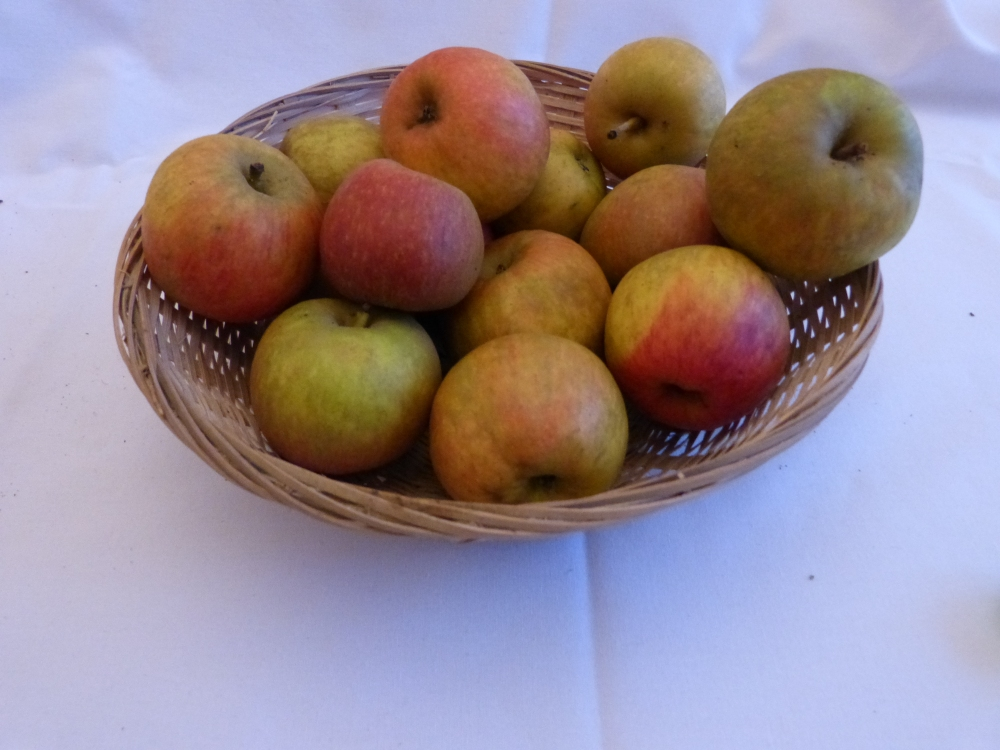 Roquet Pestel (fruit).