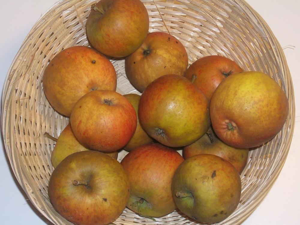 Rouge Bruyère (fruit).