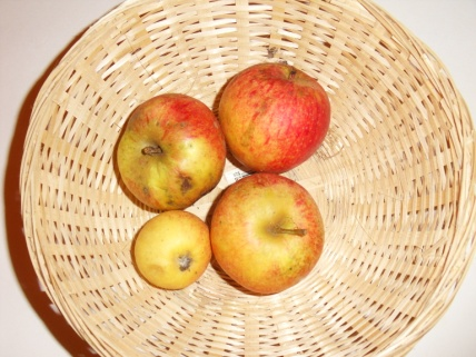 Rouget (fruit).