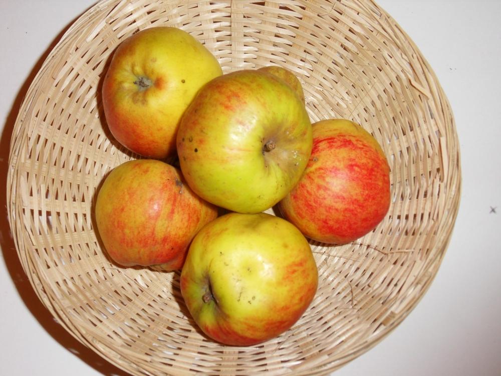 Saint Nicolas (fruit).