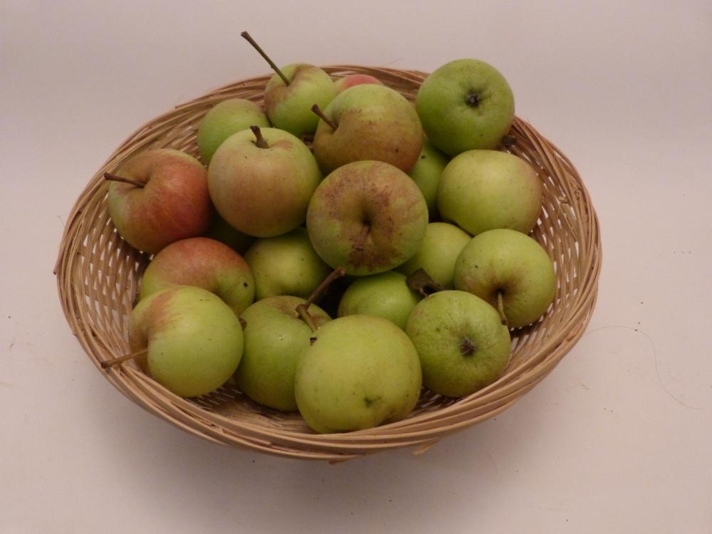 Tardive Pestel (fruit).