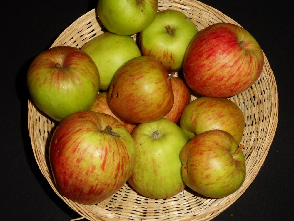 Tête de Brebis (fruit).