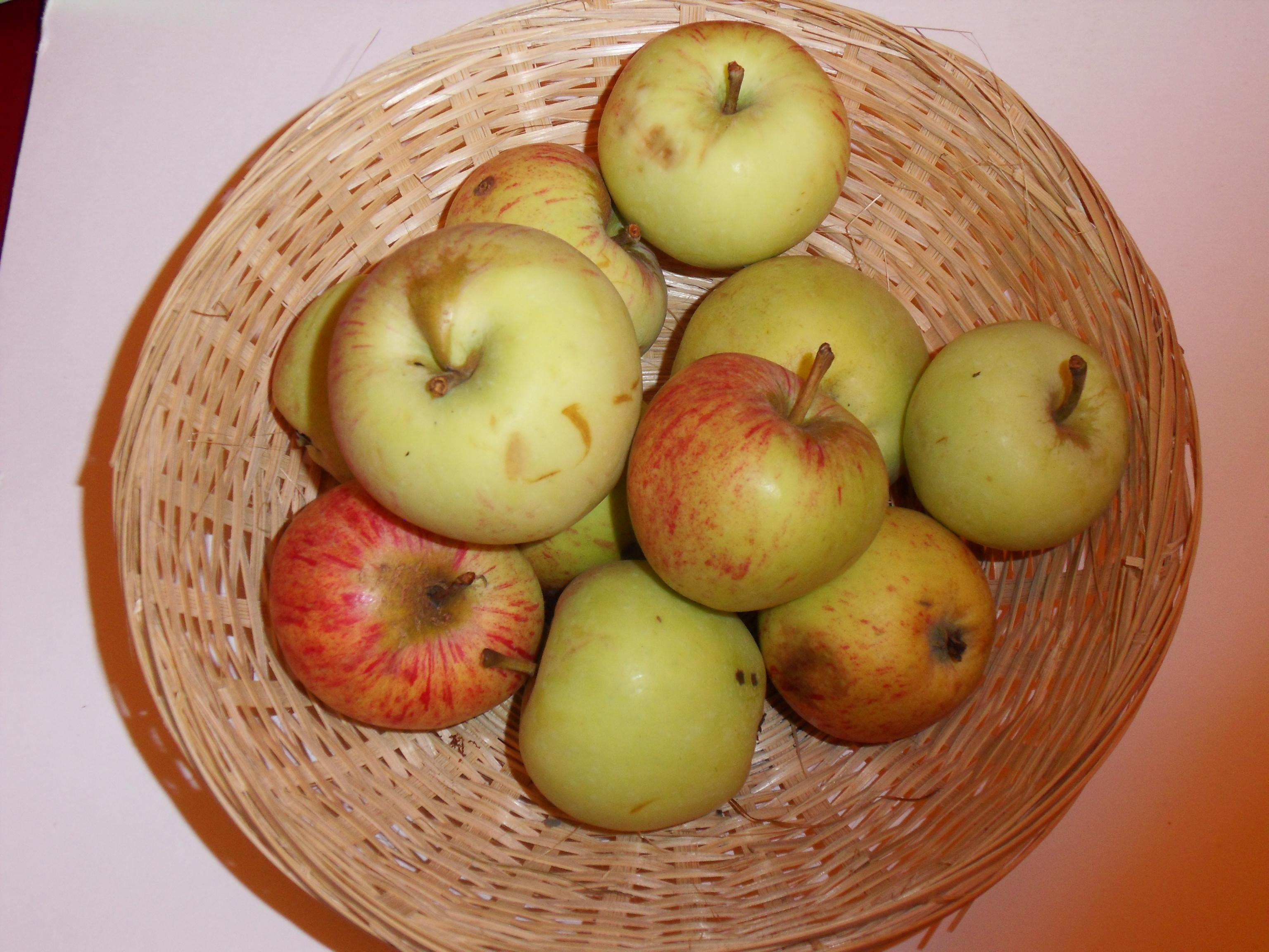 Transparente de Bois Guillaume 1 (fruit).