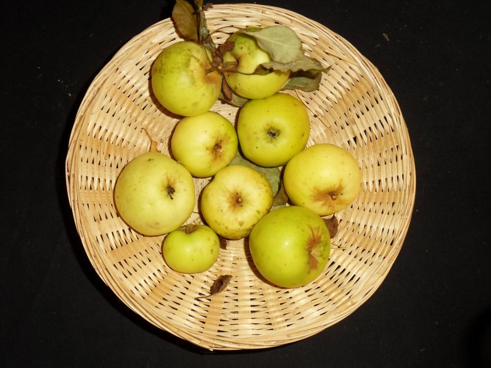 Vagnon 2 (fruit).