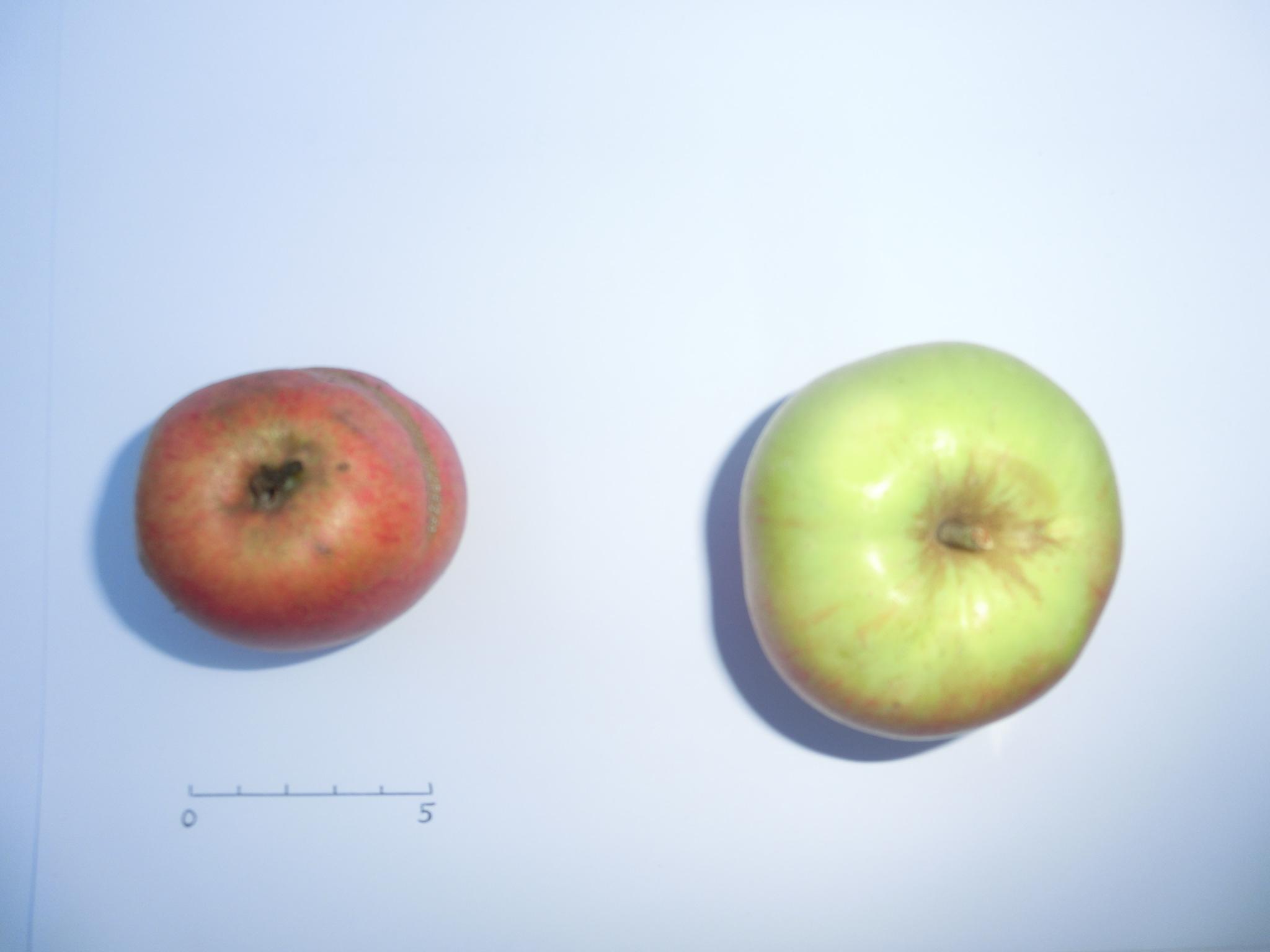 Argile plate (VFB)