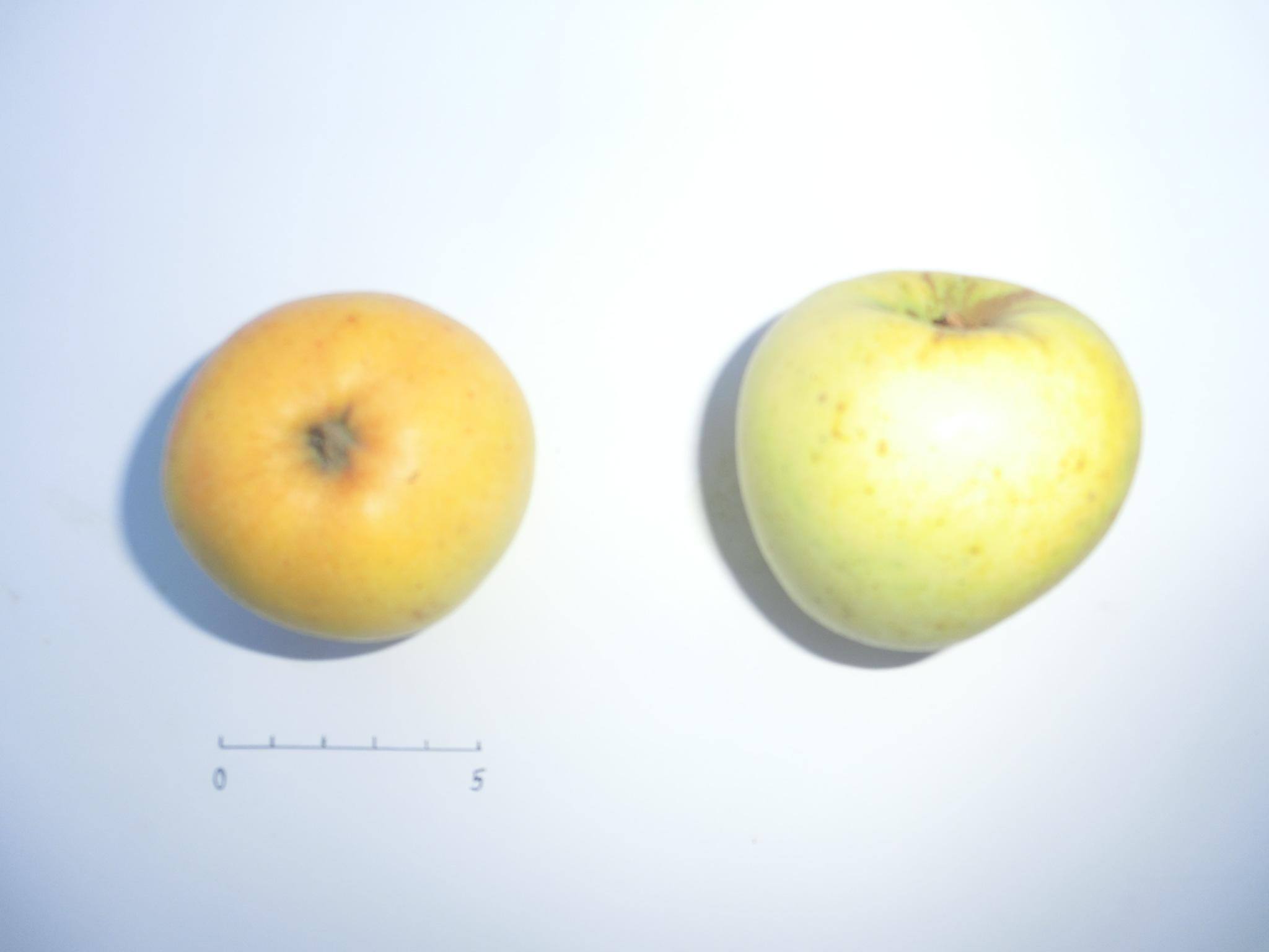 Pomme Meulan (VFB)