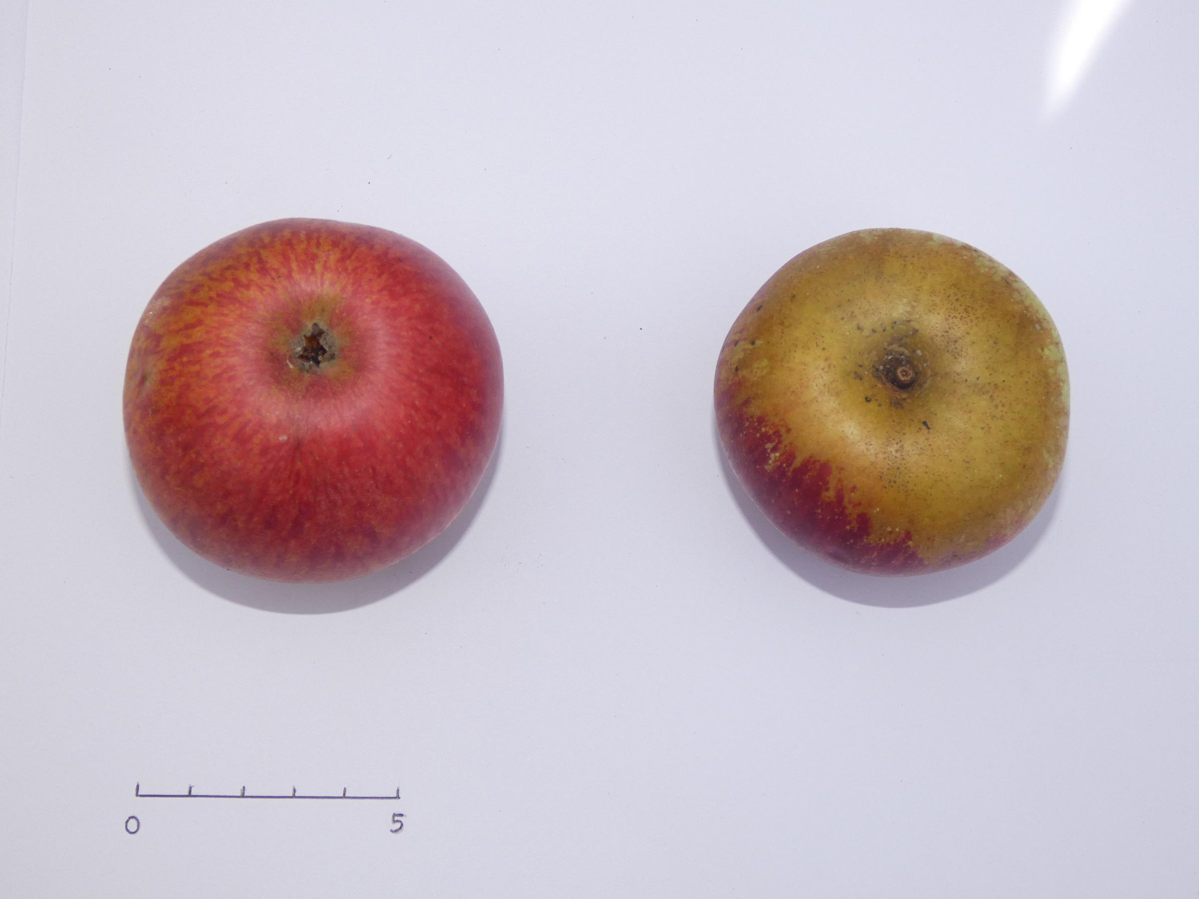 Pomme Denise (VFB)