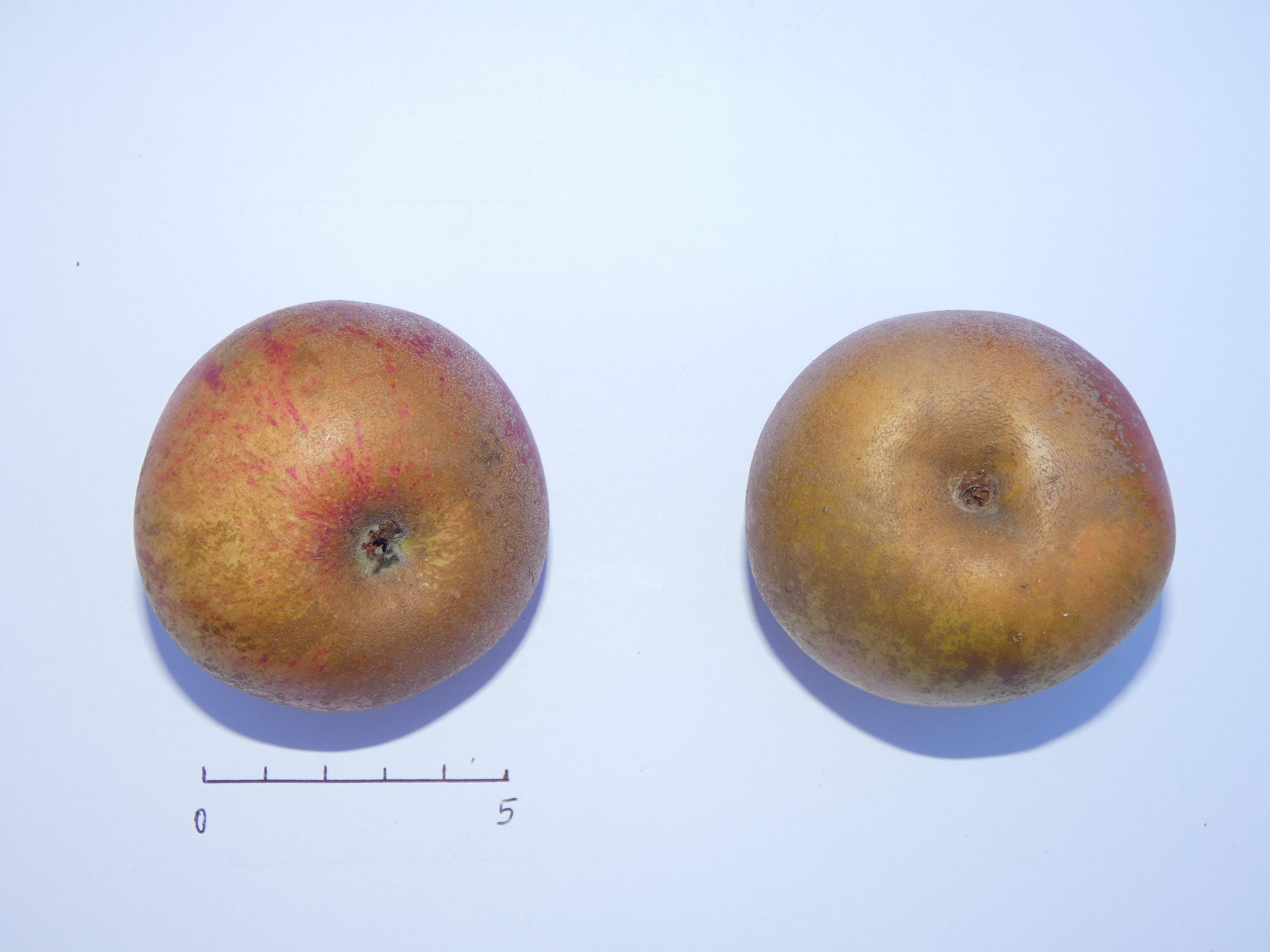 Fenouillet 1 (VFB)
