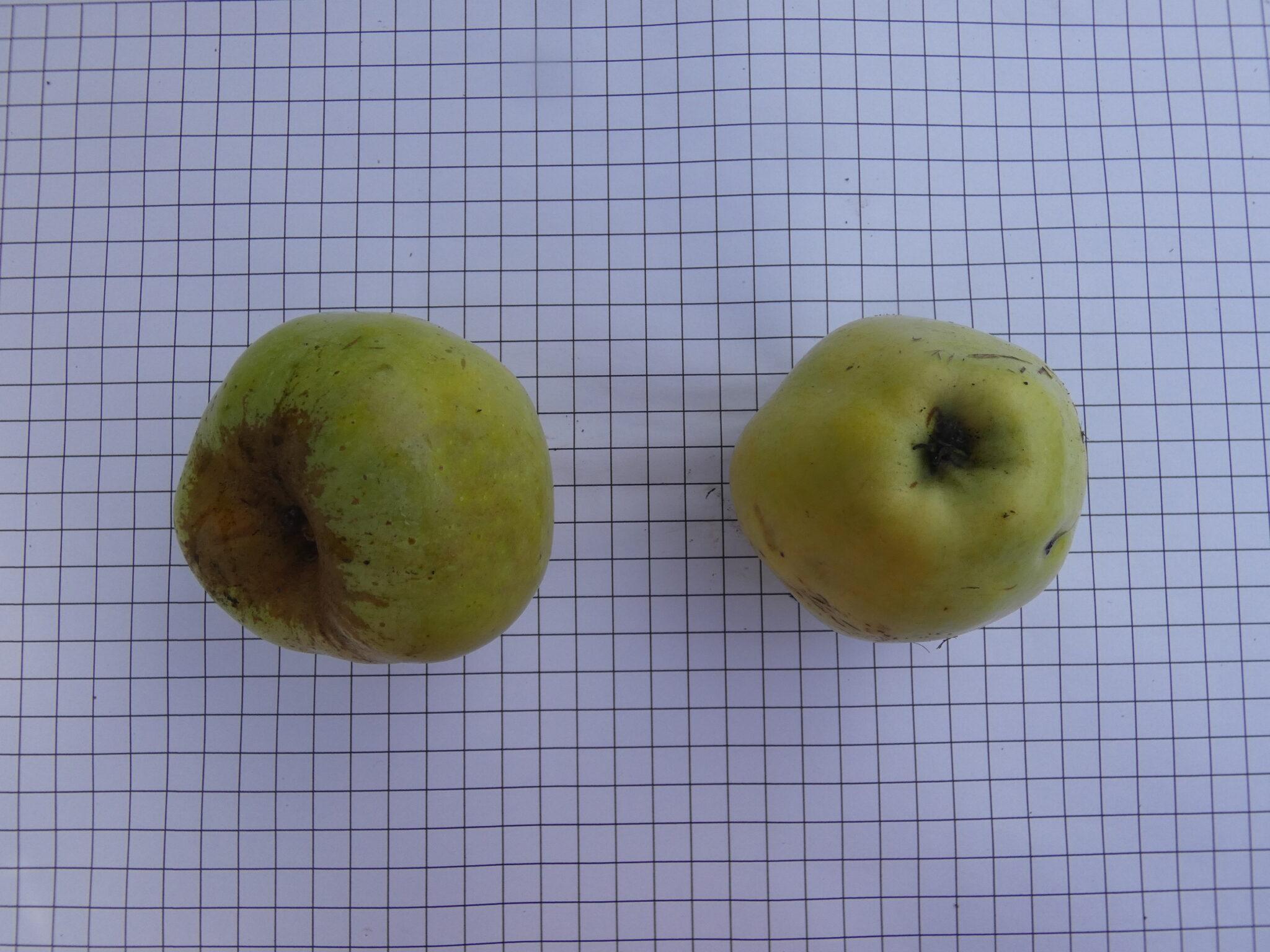 Gravenstein jaune (VFB)