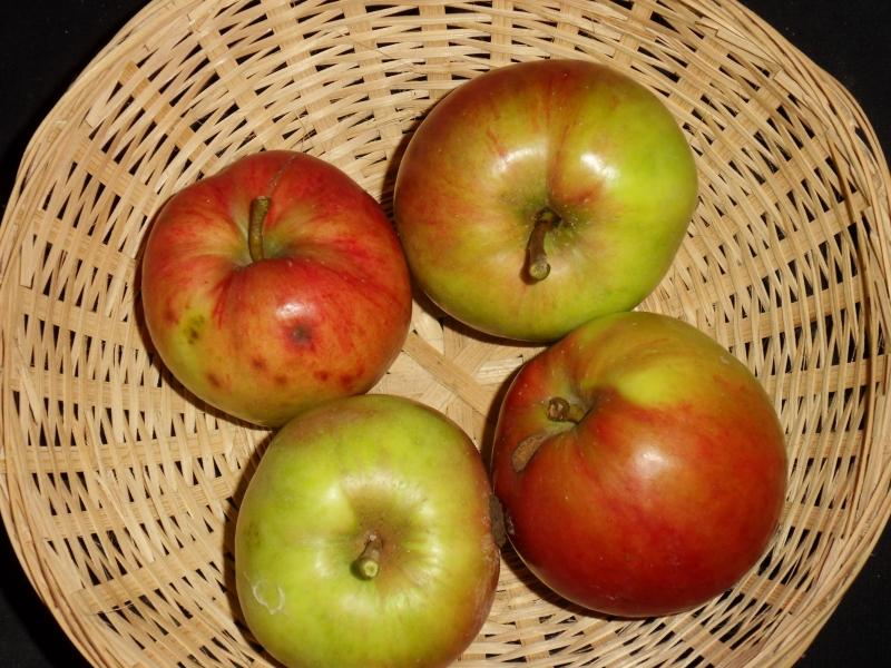 Pomme de Beurre 2