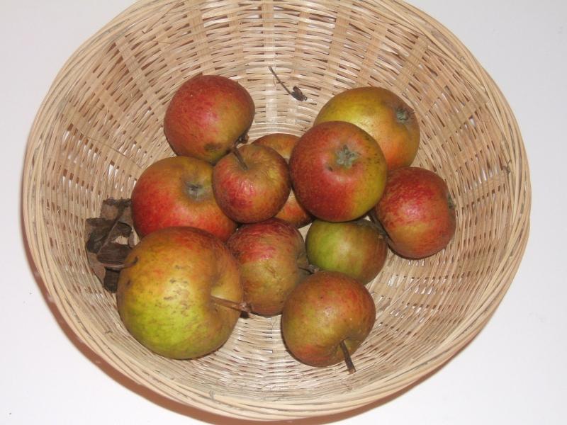 Pomme de dure (VFB)