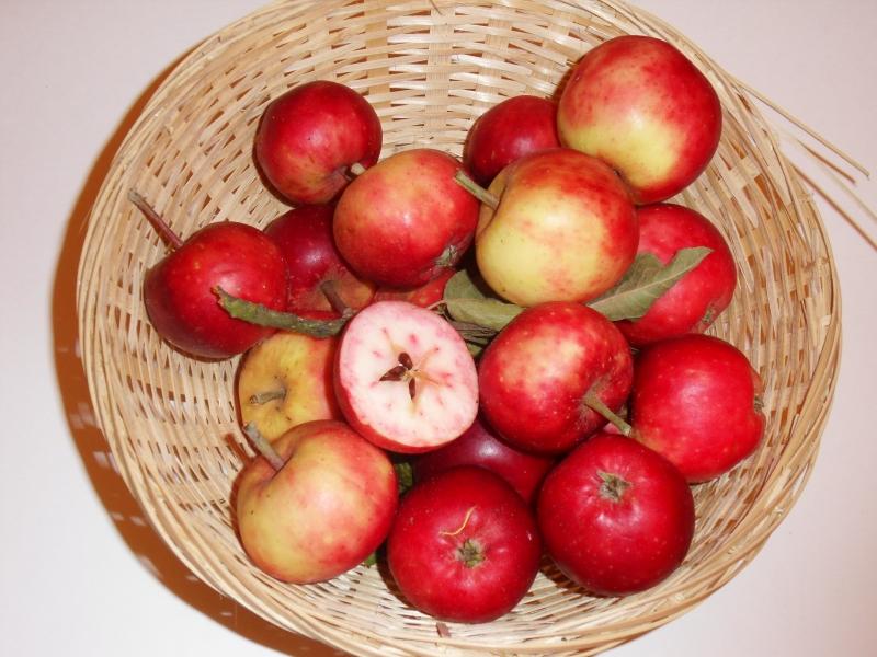 Pomme fraise (VFB)